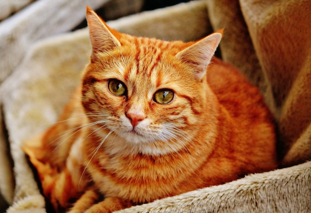 Are ORANGE CATS the FUNNIEST CATS?